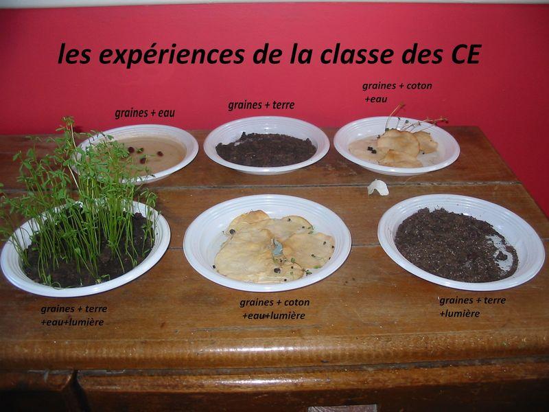 Expérience sur la germination des graines en CE 1