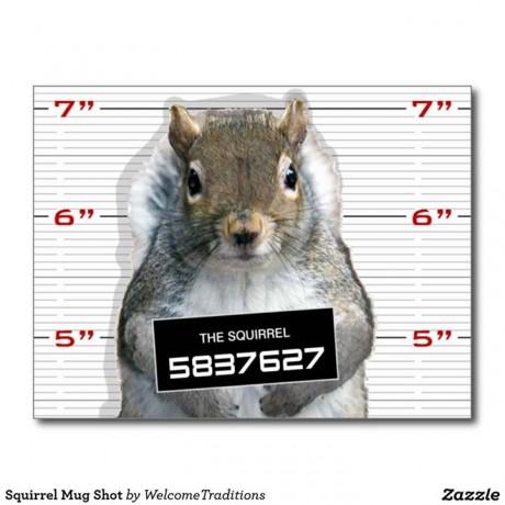 Squirrel Mug Shot - Facebook - Shelby Township Police Department