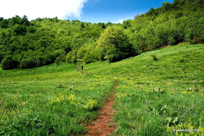 Forest sections are Intersected by meadows.