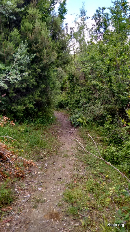 The trail is partly through the bushes