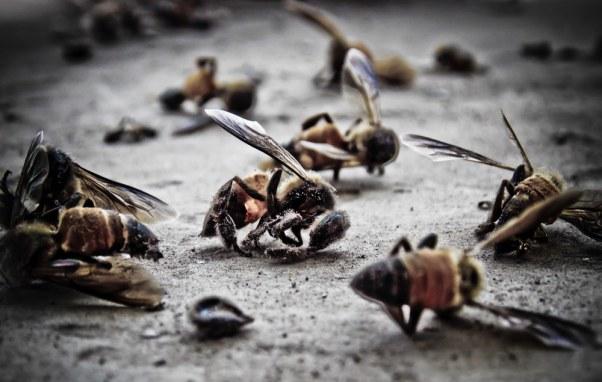 Slikovni rezultat za pszczoły california 5g