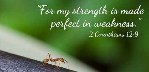 Perfect Strength By Perfect Weakness
