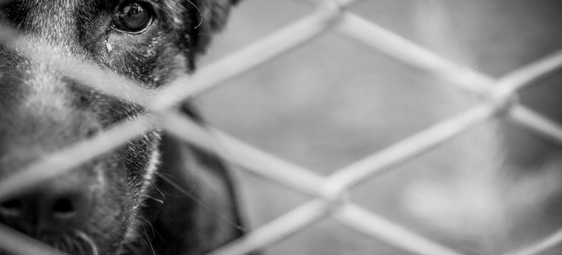 La compra de mascotas desciende y sube la adopción