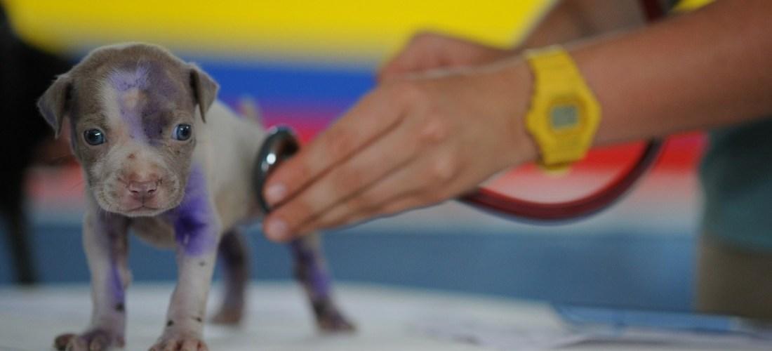 El papel de los ATV en las clínicas veterinarias