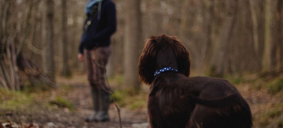 Todo lo que tienes que saber sobre los paseos con tu perro