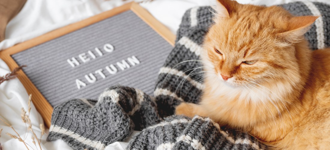 Cómo cuidar a nuestras mascotas durante el otoño