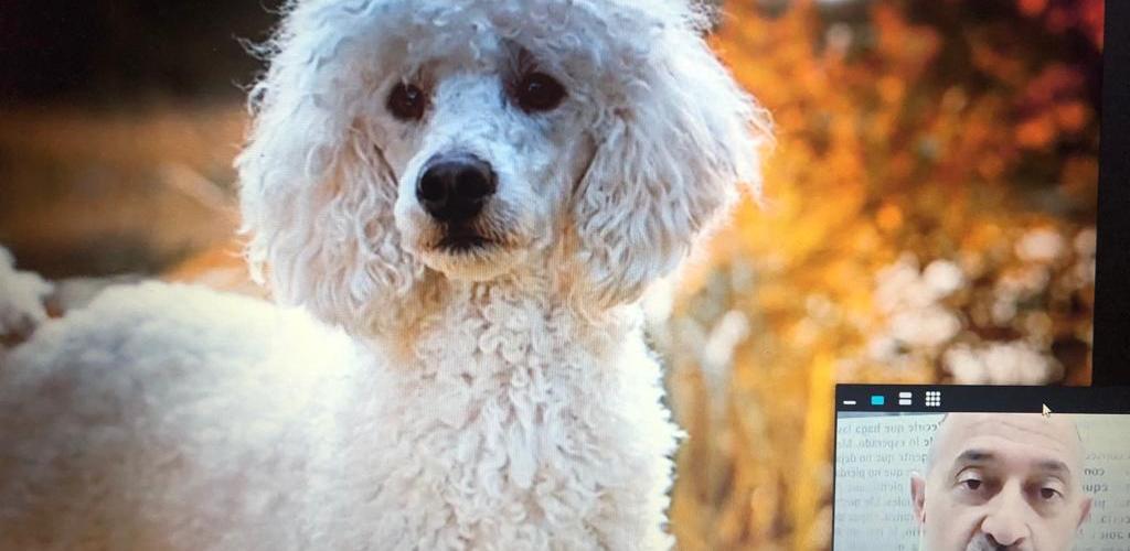 Los planes de salud, una buena opción para un centro veterinario si se sabe cómo gestionarlos