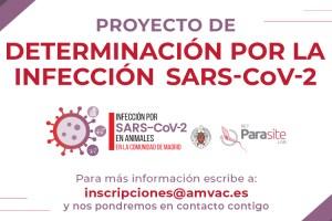 Colabora en el estudio de SARS-CoV-2 en animales
