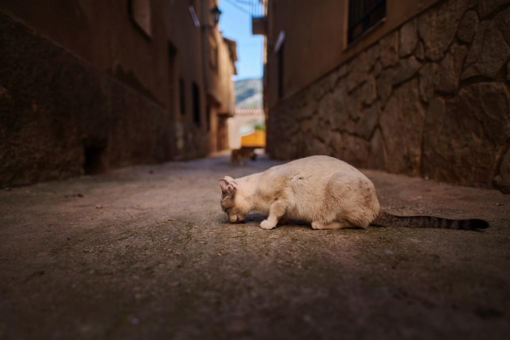 abandono gato
