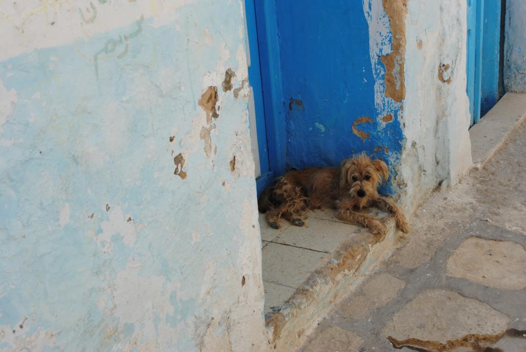 abandono perro 1