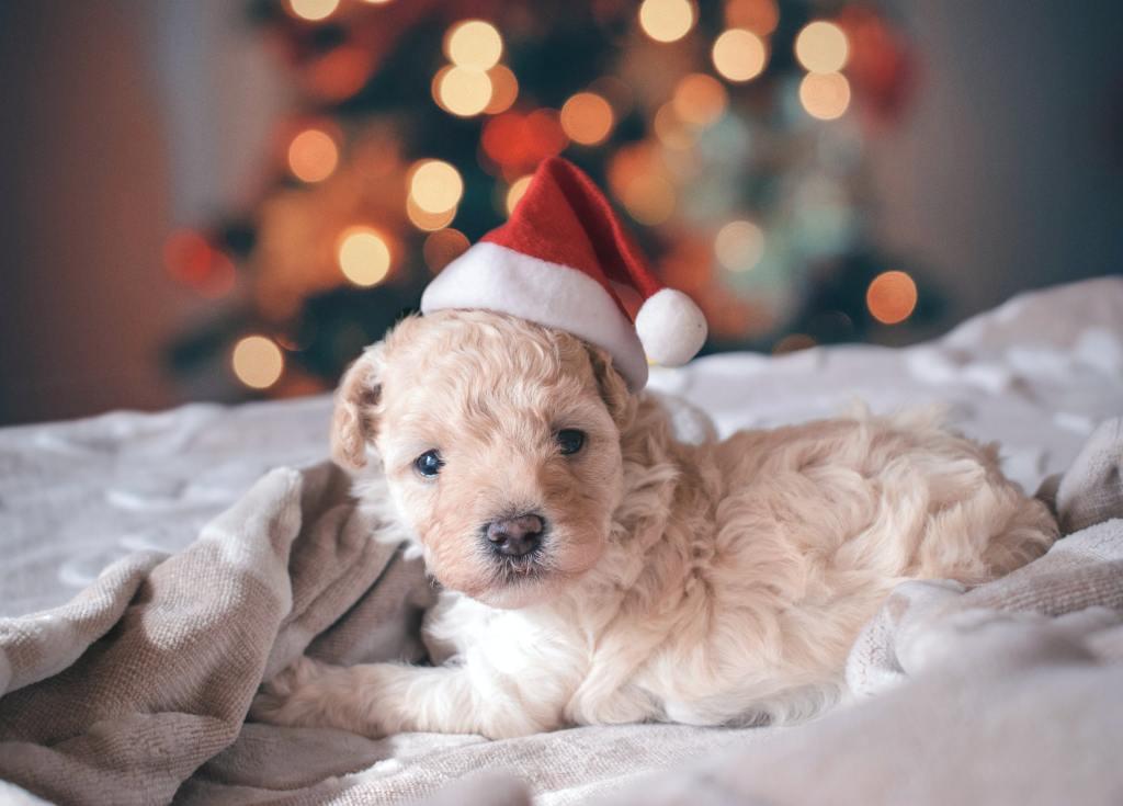 navidad mascota