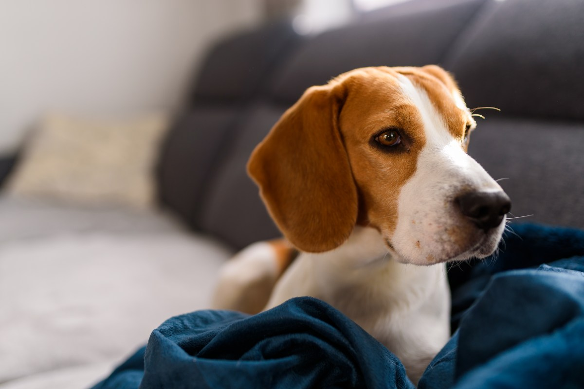 Cáncer en mascotas: ¿Qué debemos saber?