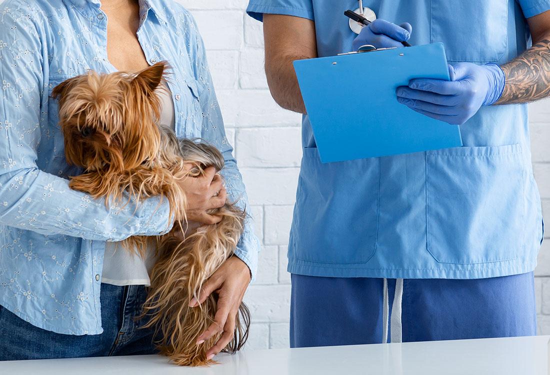 AMVAC presenta alegaciones al proyecto del Real Decreto que regulará los medicamentos veterinarios