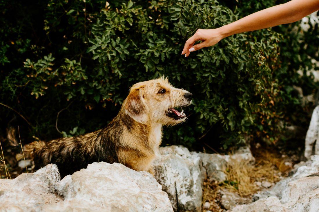 Consejos para el cuidado de mascotas sénior