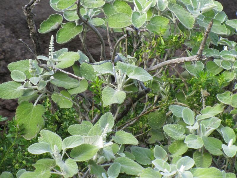 Växterna gick mest i grönt