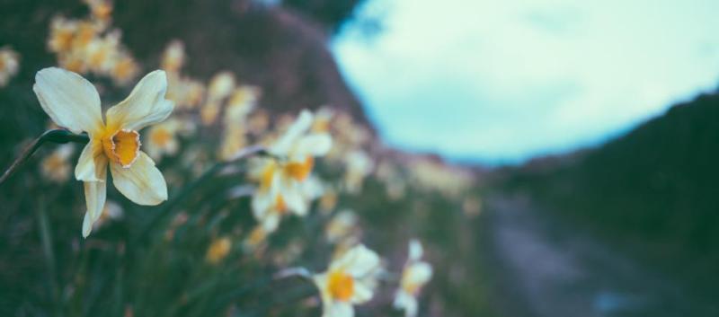 utmattad bild på blomma