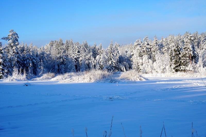 Bild på skog i vinterskrud