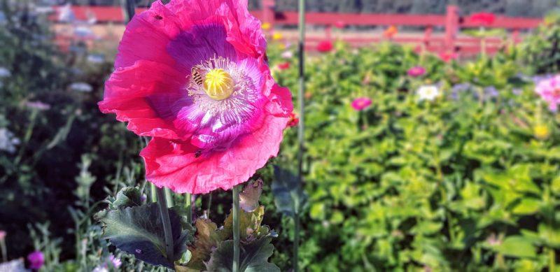 bild på rosa blomma inlägg välja att jobba deltid