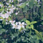 vita blommor inlägg om förändring