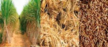 biomassa-1 Biomassa: definizione, vantaggi e svantaggi Energie Alternative