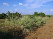 Energía Biomasa