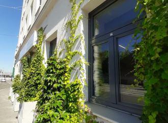 """""""BeRTA"""" moduli u Beču: Novi način ozelenjavanja grada"""