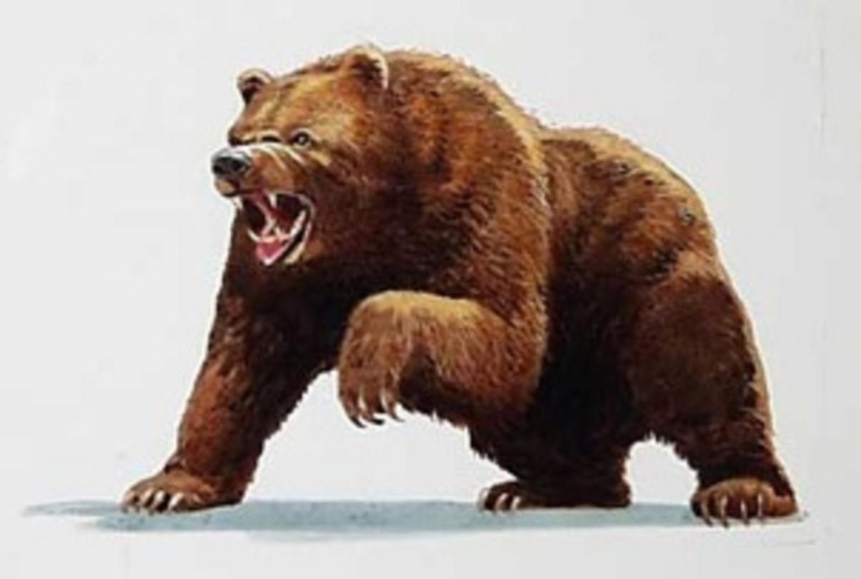 bear in stock trade