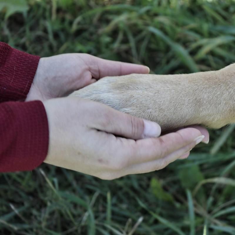 Eine Frau hält die Pfoten ihres Hundes mit beiden Händen