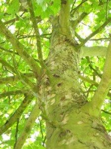 kuenstliche-photosynthese-licht-wasserstoff-speichern