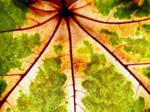 kuenstliche-photosynthese-solar