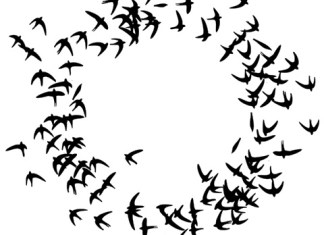 ampard-schwarmspeicher-regelleistung-schweiz