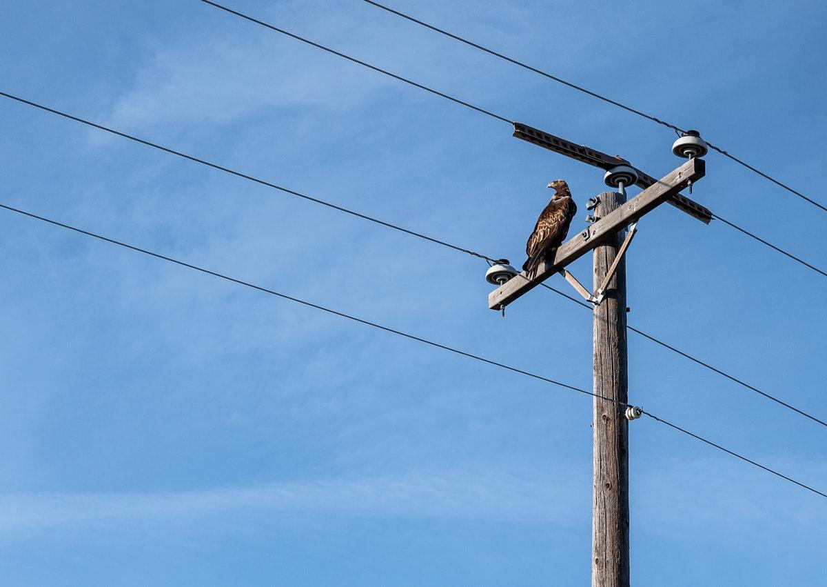 A bird sitting on a utility pole.