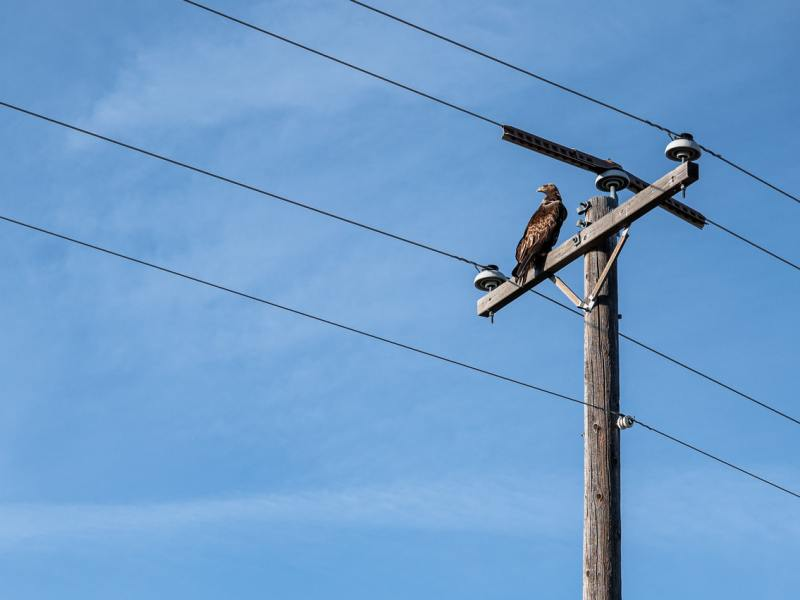 A bird sitting on a utility pole.