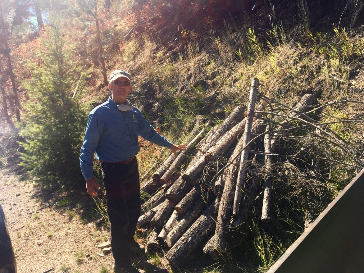 A man stands in front of a pile of thin culled trees.