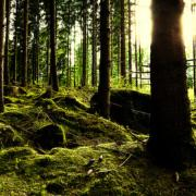 How Nordic countries can inspire the EU's bioenergy policy