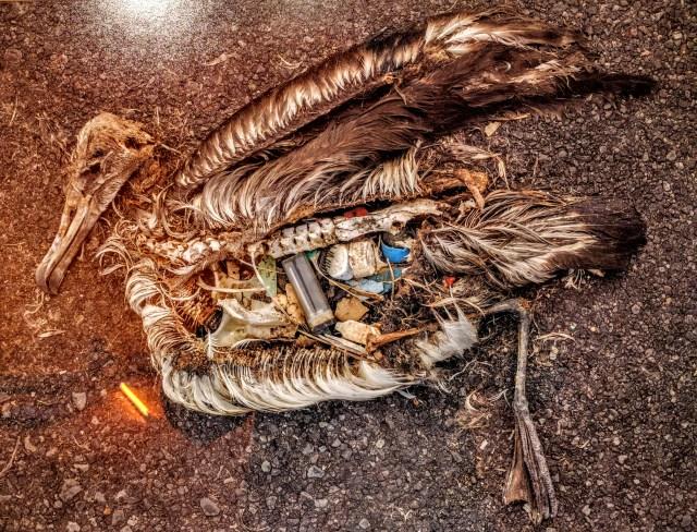 plastic-dead-bird-chris-jordan-2009-midway-cf000313