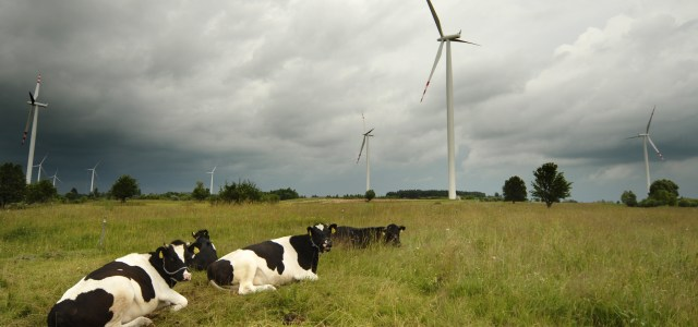 Polish Wind Power