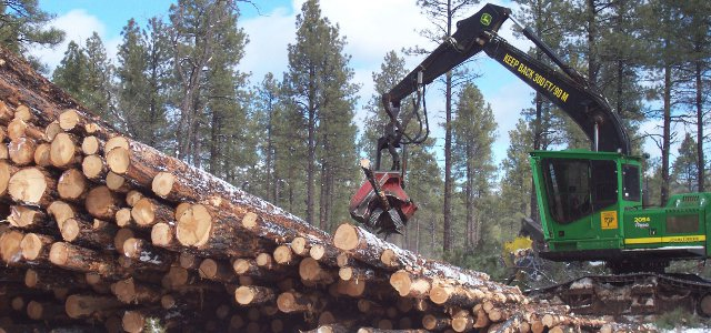 Logging in Arizona