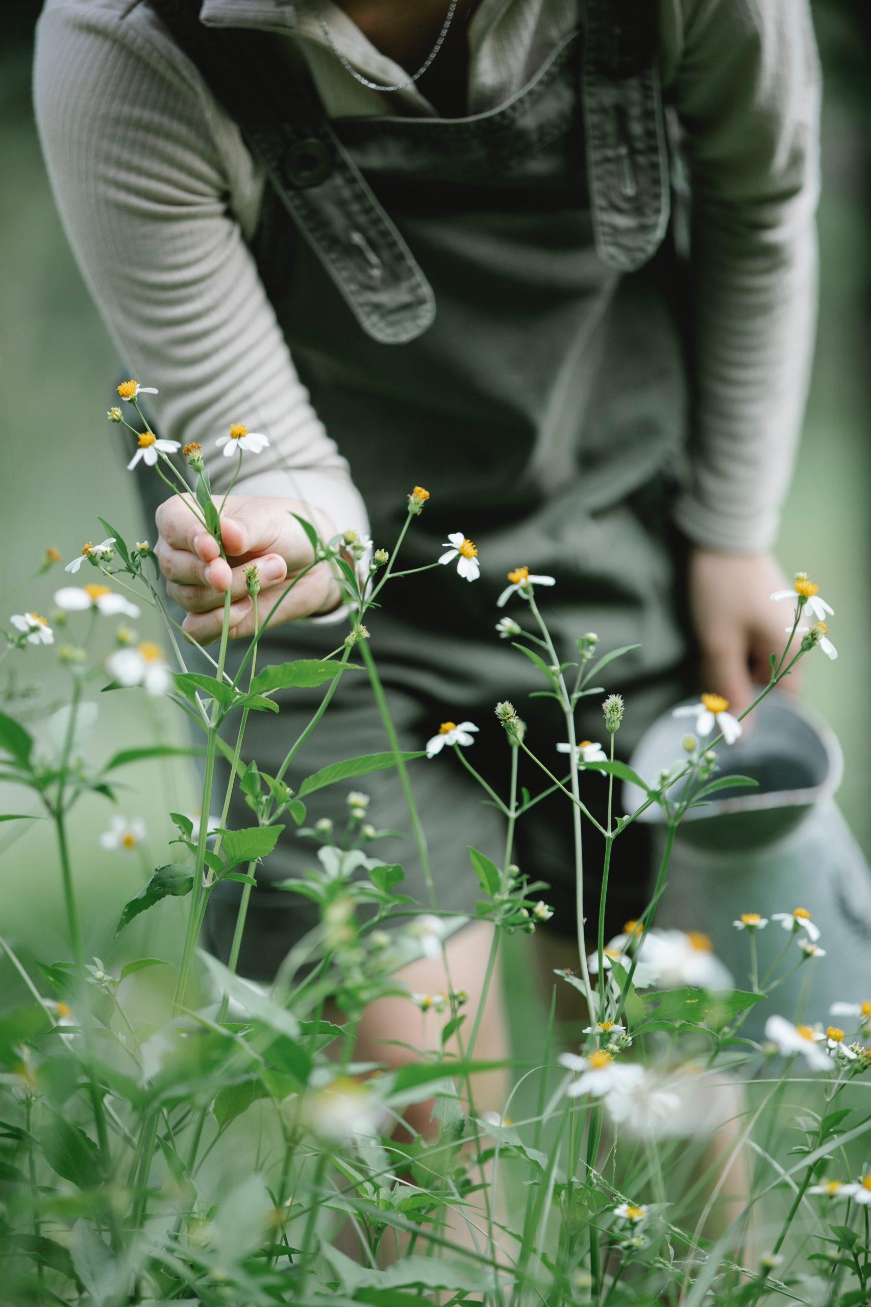 Faites une pause nature et sentant tout ce qui vous entoure