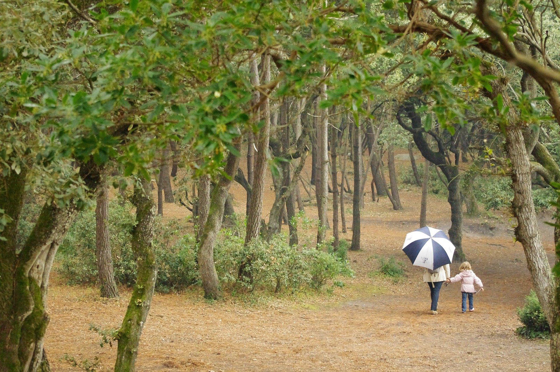 Sortir en nature est un bel objectif de printemps. Promenons dans les bois en mode slow life !
