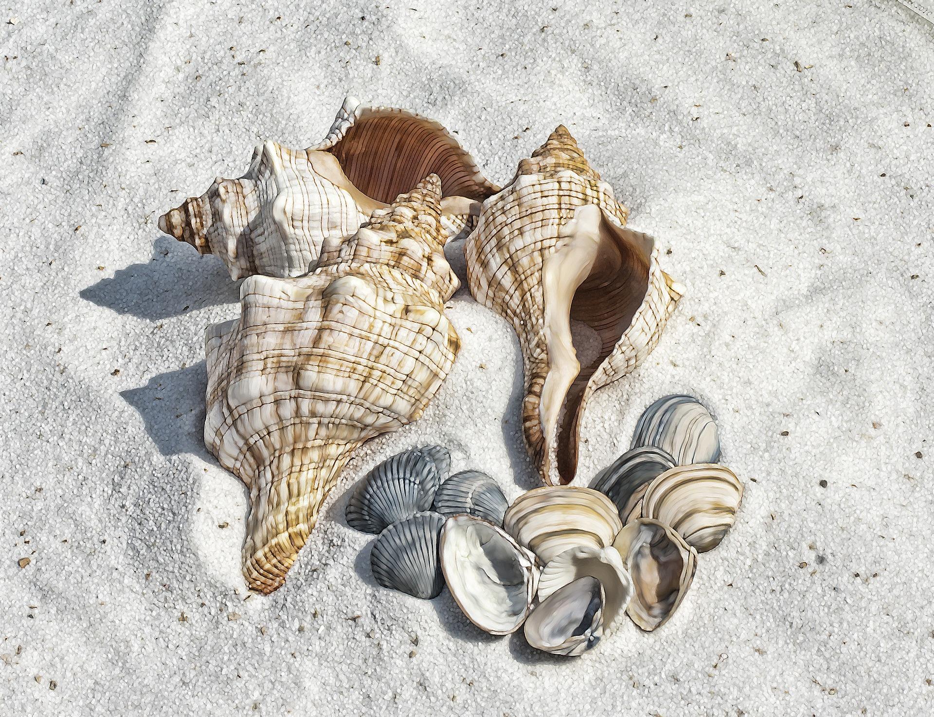 Ne rater le ramassage des coquillages lorsque vous serez de passage en mer. Il est même possible d'en ramener en grande quantité.