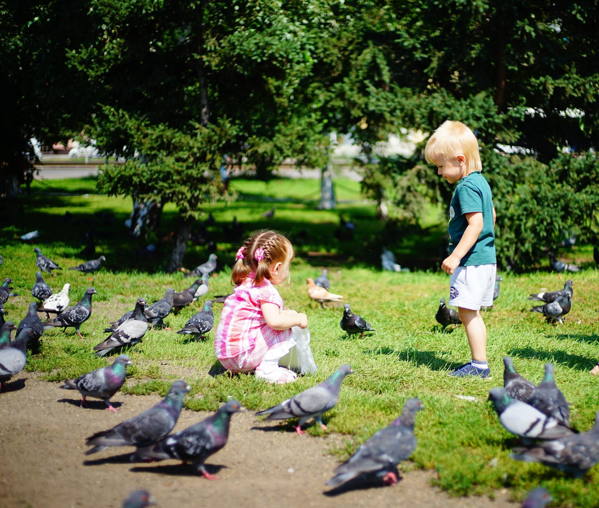 Allez voir les animaux de la ville si vous habitez en ville, les pigeons aussi ont le droit à leur quart d'heure de gloire.
