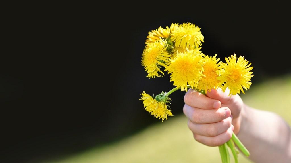Faites de beaux bouquets de fleurs de pissenlit.