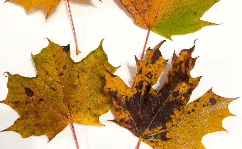 Leaves (I)
