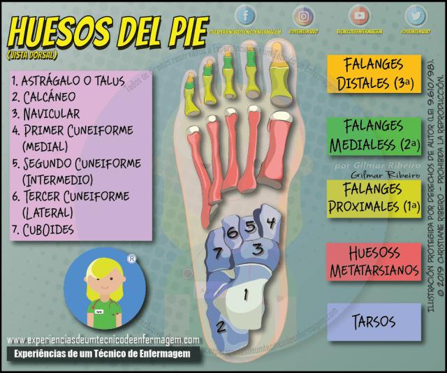 Los Huesos Del Pie Enfermagem Ilustrada