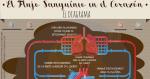 El Flujo Sanguíneo en el Corazón: El Diagrama