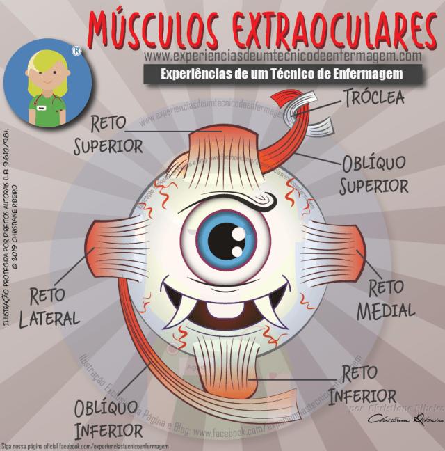 Músculos Extraoculares