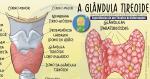 A Glândula Tireoide