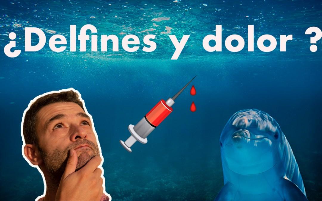 Cómo te pueden ayudar los delfines para que la analítica sanguínea te duela menos