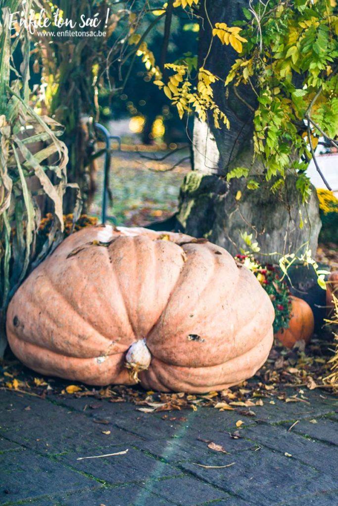 pairi daiza halloween 683x1024 Halloween à Pairi Daiza   dates et informations 2016